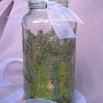 Diy Fairy Lanterns Who Needs A Cape