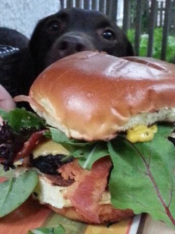 Cheeseburger with gluten free bun (and my puppy lurking behind it)
