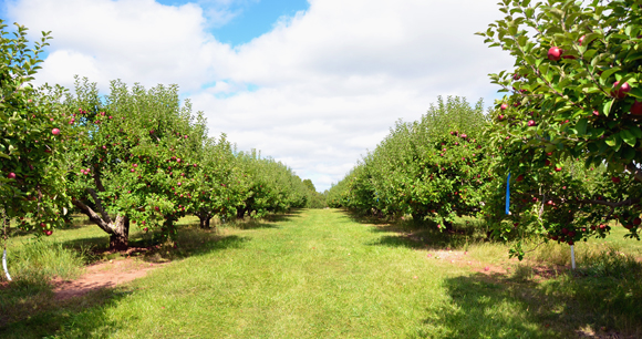 Six Great Apple Orchards And Pumpkin Patches In Northeast