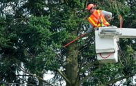 Tree Care Service: How to Start it Up