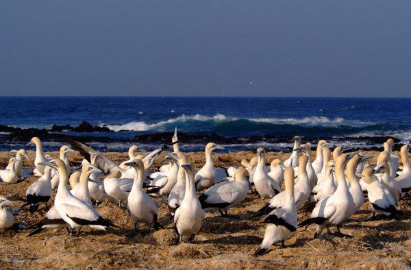 The Bird Island