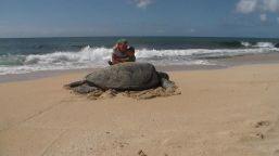 Giant sea turtle!!