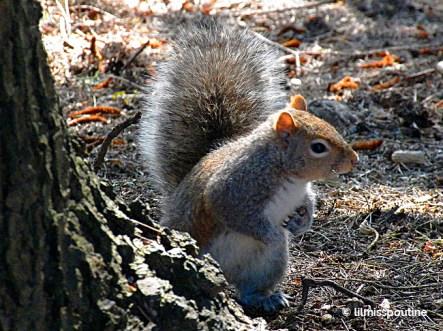 Grey Squirrel asks, Who, me?