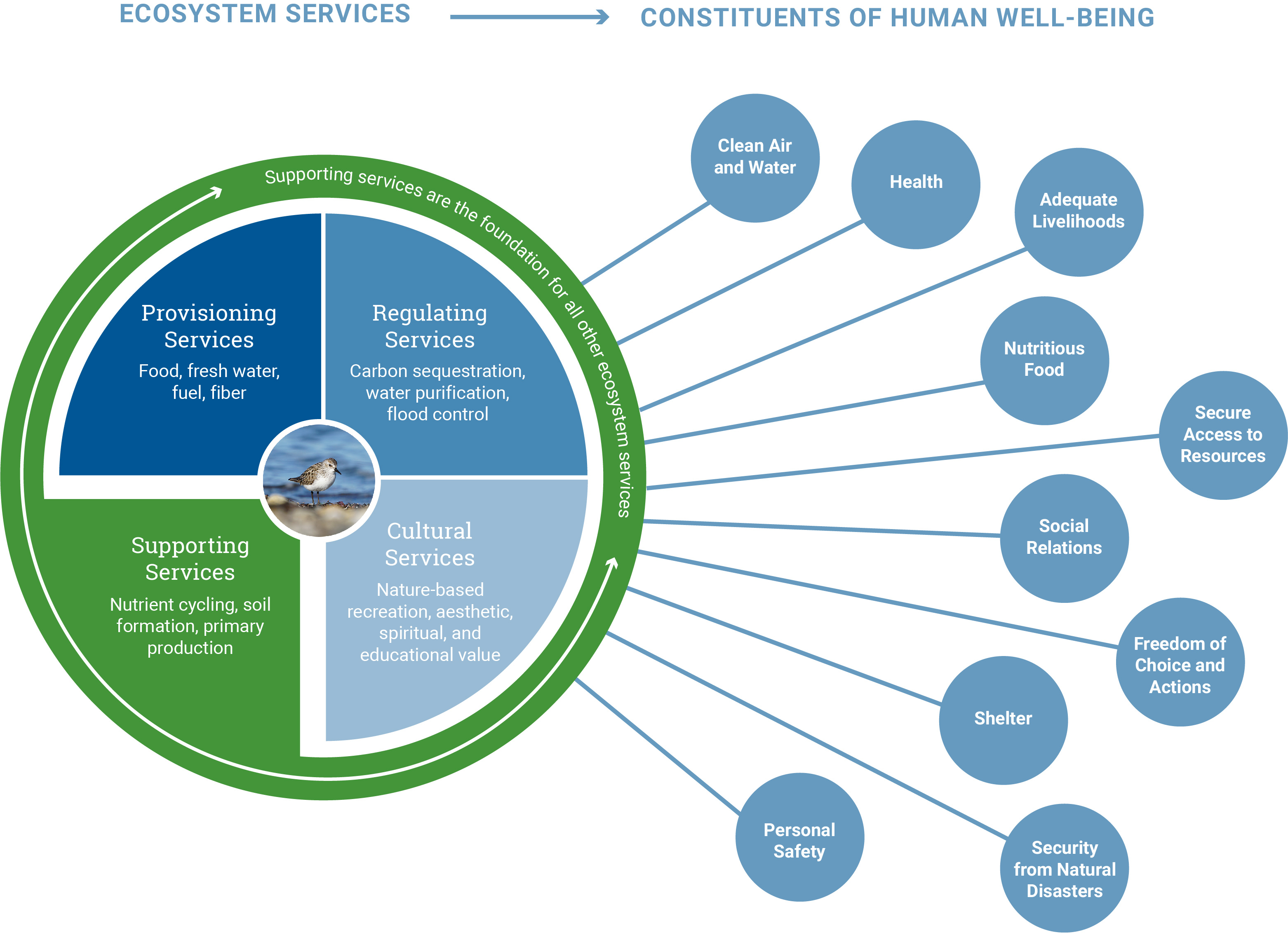 An Introduction To Ecosystem Services
