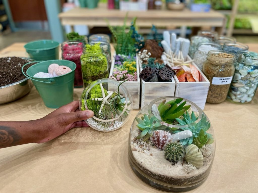 Plant and Terrarium Workshop Store PlantHouse To Grow Roots in Decatur - Photo