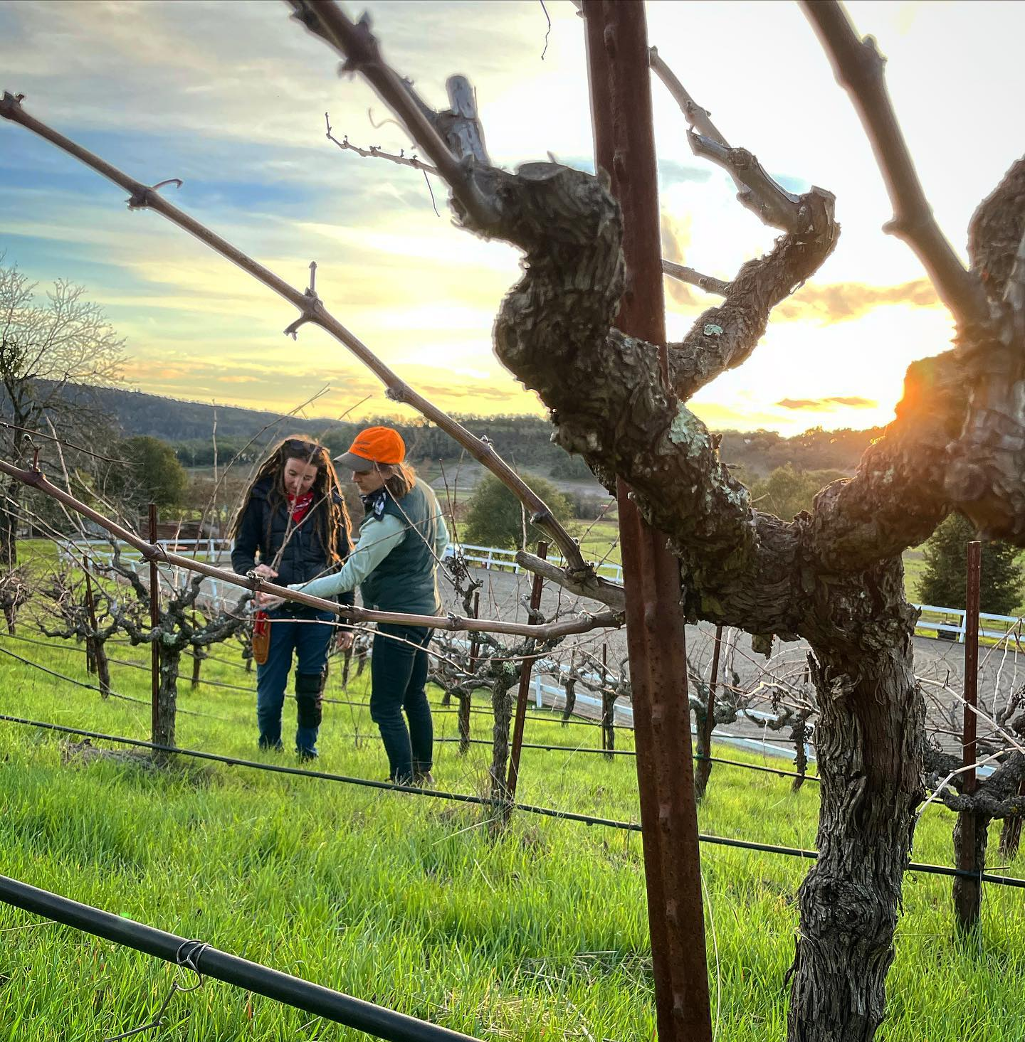 Dos Piedras Wines will Debut in Sonoma Valley