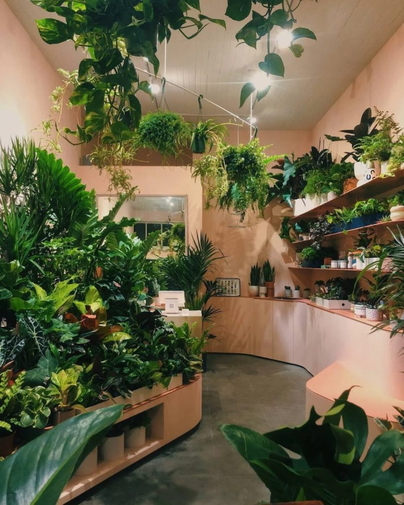 Plants and Friends to Open New Nursery in Hayes Valley