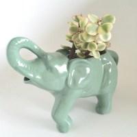 Elephant Creamer Meets the Succulent