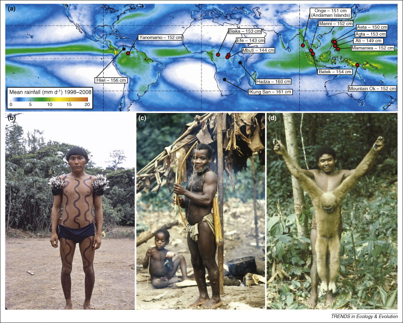 why pygmies why evolution
