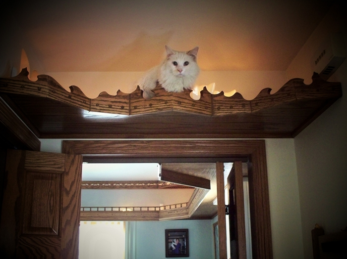 Caturday felid trifecta Social justice kitten calendar