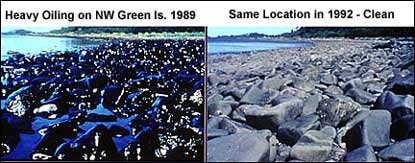 A photograph shows a heavily oiled beach in 1989, adjacent to a photo of the same beach, healthy and apparently oil-free, three years later.