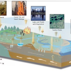 Water Ecosystem Diagram Of Throat And Esophagus Tundra Fire: Bad News On Warming | The Why Files