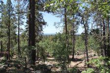 Rocky Ridge Ponderosas and Oaks