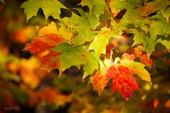 Bright_Color_Fall_Leaves_Sun