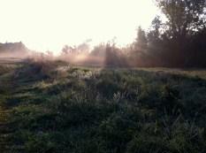 Frost_Mist_Field_Sunlight