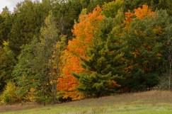 HickoryMeadowsFoliage