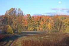 Meadow_Path_Moon_Foliage