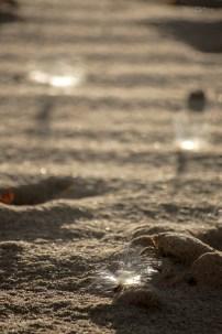 Sunlit Milkweed Seeds on the Sand