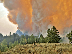 wildfire-closes-se-yellowstone