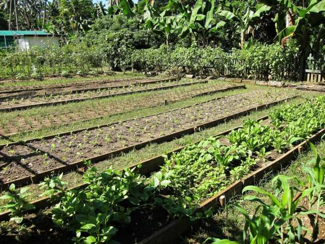 Farming at Eco Resorts in Fiji - Sustainable Tourism in Fiji