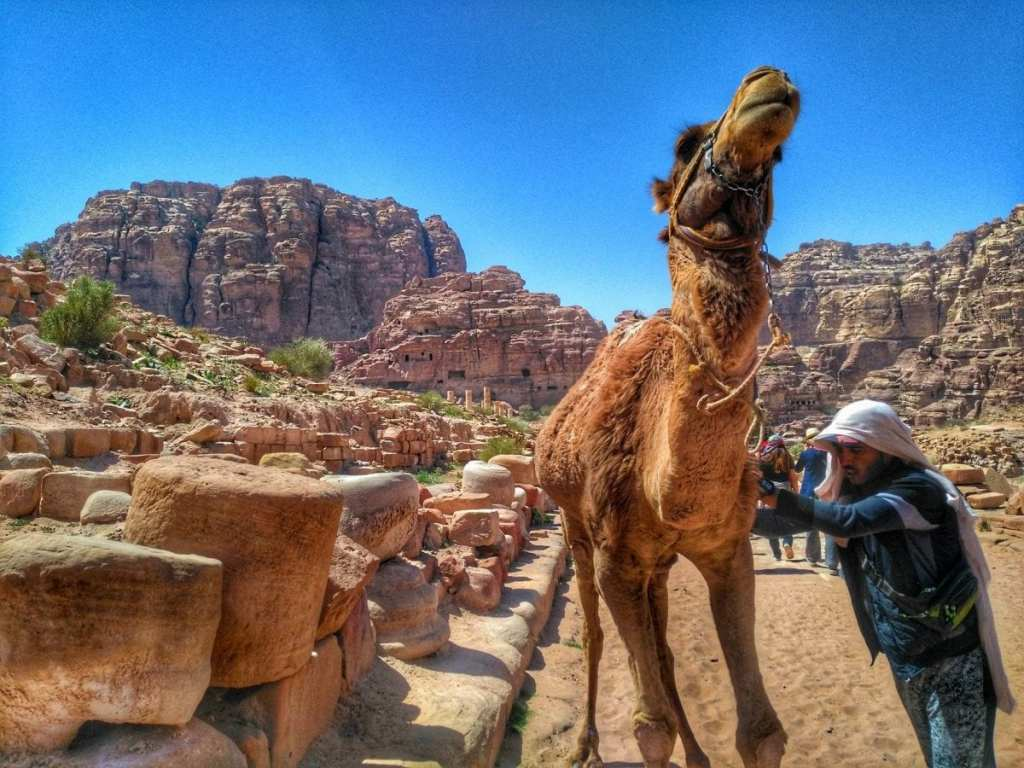A Camel and the Ruins of a Roman Colonnaded Street at Petra - Visit Petra