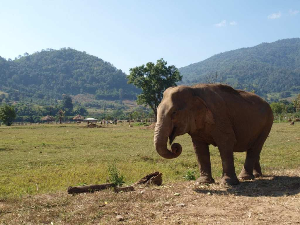 Exploring Elephant Park in Chang Mai - Backpacking Southeast Asia