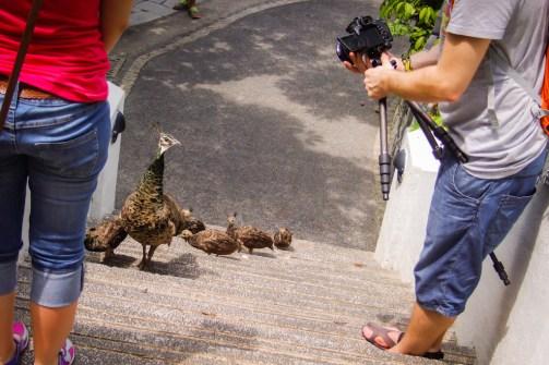 Wściekłe Ptaki... na żywo