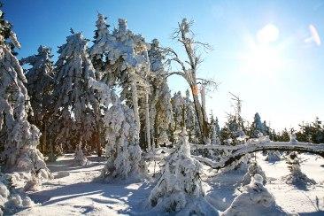Góry Sowiego Zimowy Las i Słońce