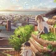 Film Anime Orisinal Nakitai Watashi wa Neko o Kaburu Garapan Studio Colorido Ungkap Seiyuu Lainnya 12