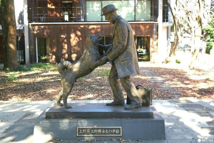 Kisah Hachiko, anjing setia yang menunggu majikannya pulang. 3