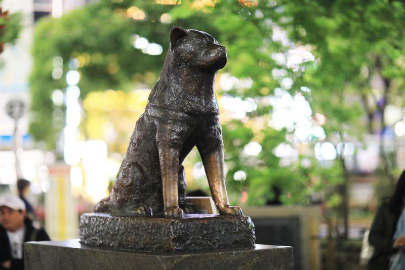 Kisah Hachiko, anjing setia yang menunggu majikannya pulang. 1
