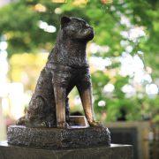 Kisah Hachiko, anjing setia yang menunggu majikannya pulang. 7