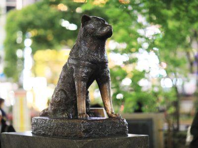 Kisah Hachiko, anjing setia yang menunggu majikannya pulang. 19