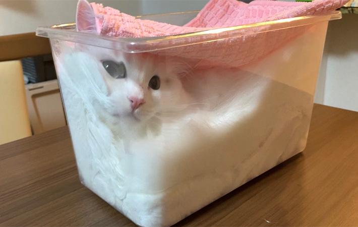 Seorang Majikan Memfermentasikan Kucingnya 1
