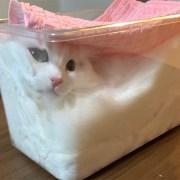 Seorang Majikan Memfermentasikan Kucingnya 11