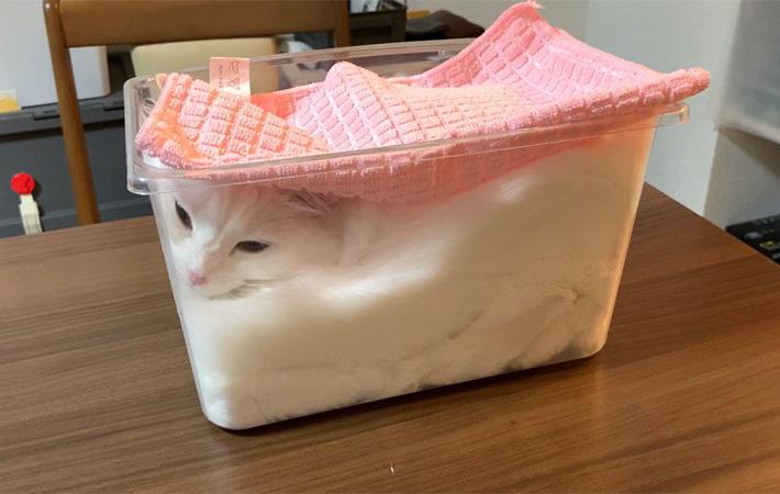 Seorang Majikan Memfermentasikan Kucingnya 5