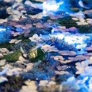 Tangkapan Foto Night Hydrangea yang Diambil Yukari Mitani 6
