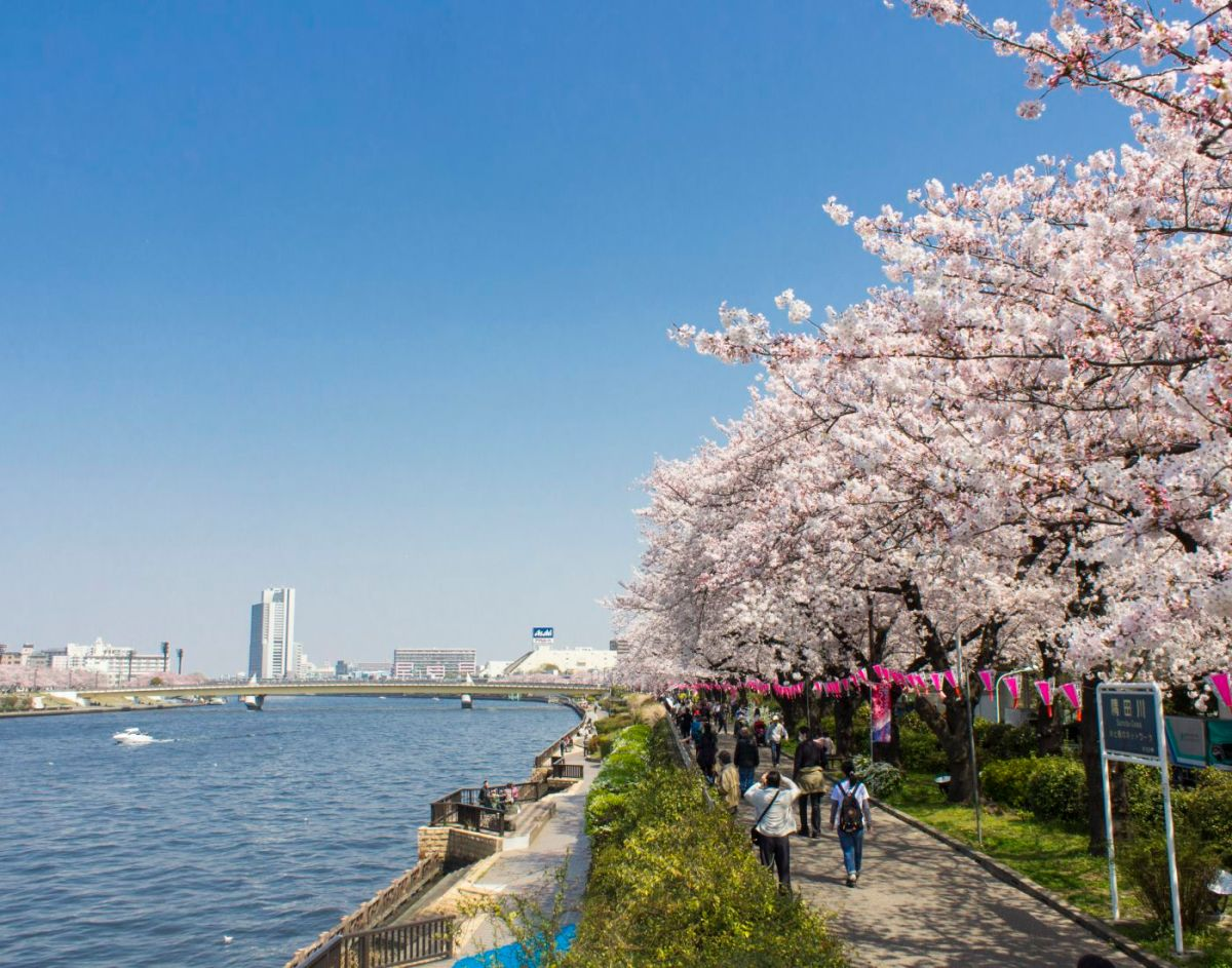 Mengenal Hanami, Tradisi Unik di Jepang yang Sangat Menyenangkan! 4