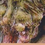Recensie: De wijsheid van bomen en kruiden