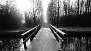 brug naar een bomenlaan in de winter. Foto Loes
