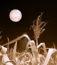 2256121-campo-de-maiz-y-la-luna-en-el-infrarrojo