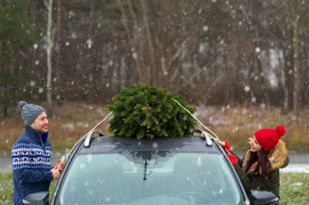 Choosing a live Christmas tree from a farm nearby