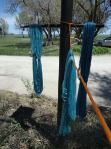 Indigo-dyed yarns drying in the breeze