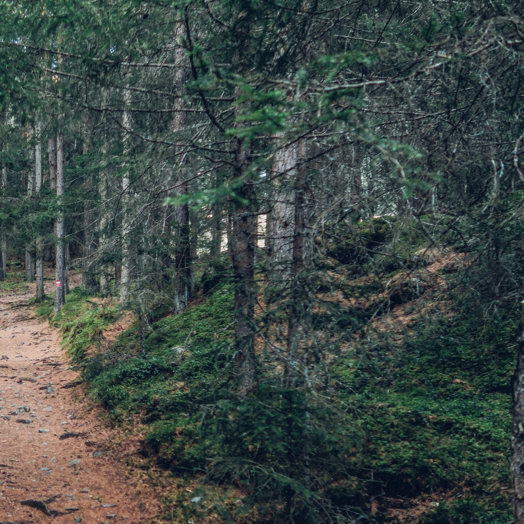 The Pain Cave | Forest Path