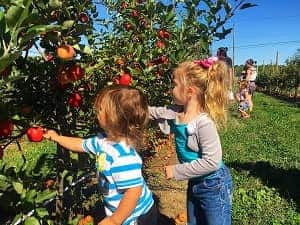 Apple Orchard Rochester NY