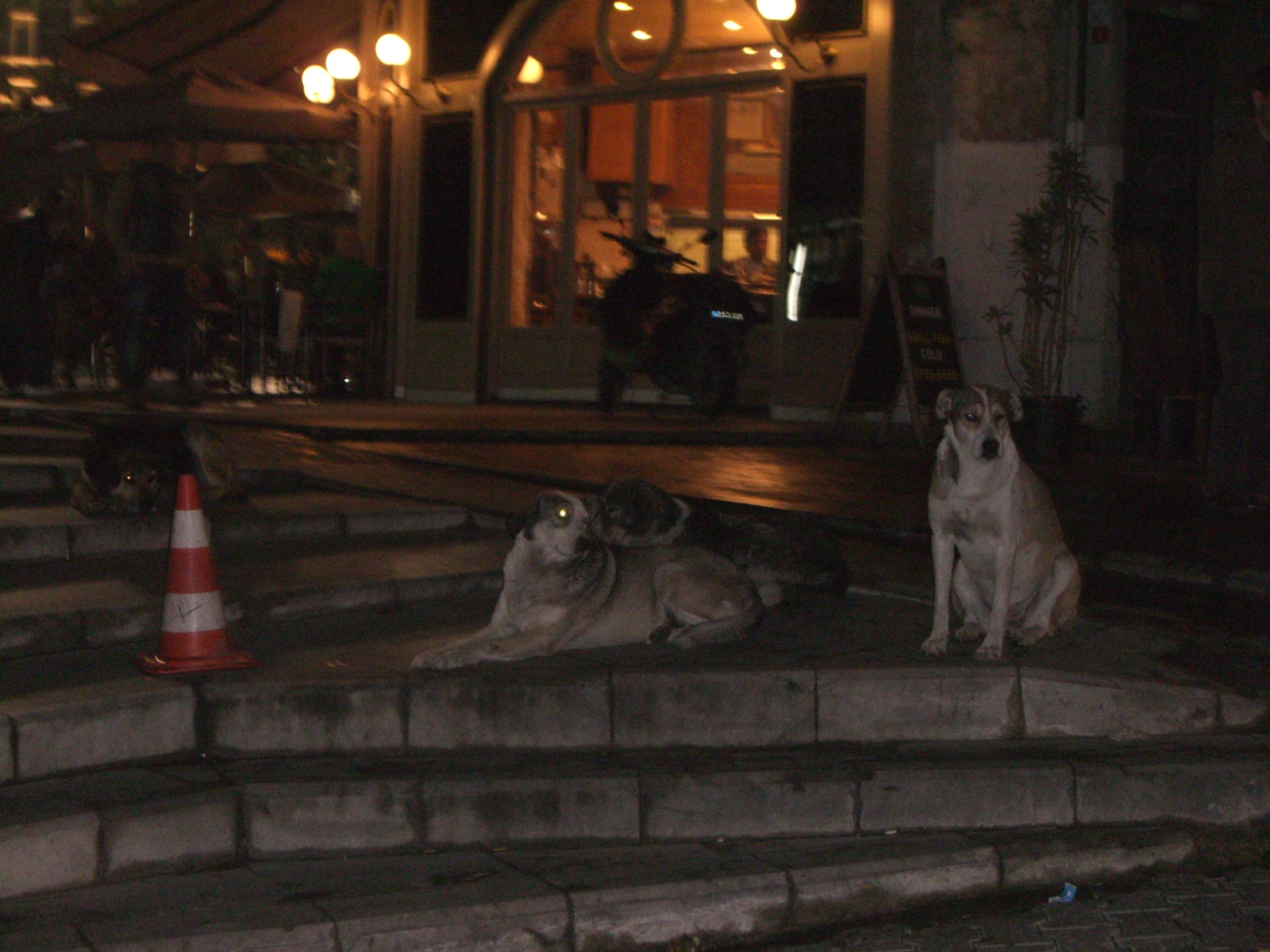 The Istanbul street dogs are very handsome, but their predicament makes me sad.