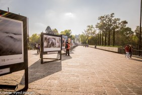 The walk to the Bosque de Chapultepec - the largest park in Latin America - had a feature of art that illustrated the impact of climate change around the globe.