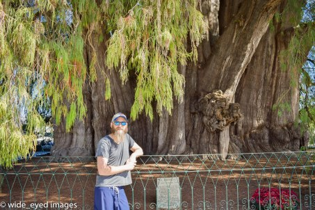 Pedro in front of the Santa Maria's 2,000-year-old Montezuma cypress, the world's thickest tree.