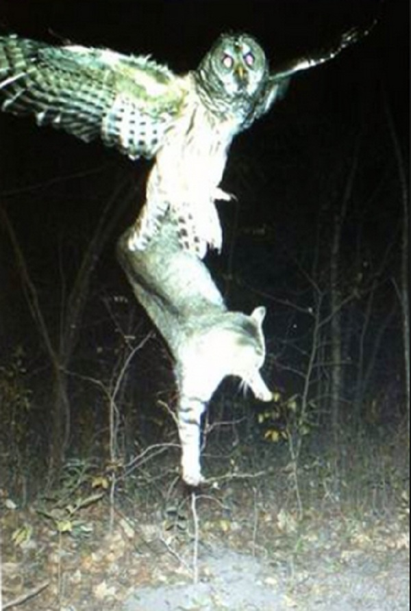 Funny Trail Cam Pictures : funny, trail, pictures, Trail, Camera, Photos