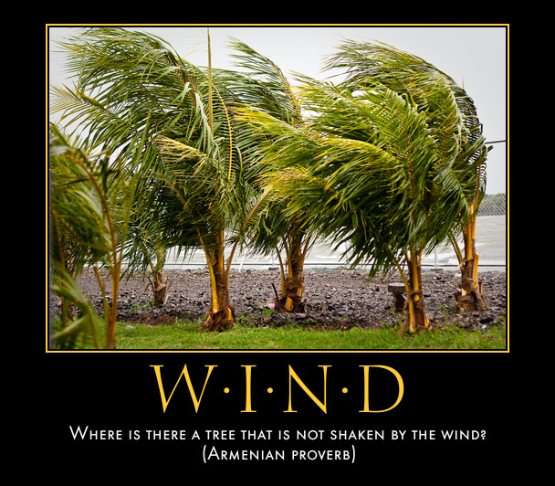 Image result for Pictures of Trees shaken by the wind